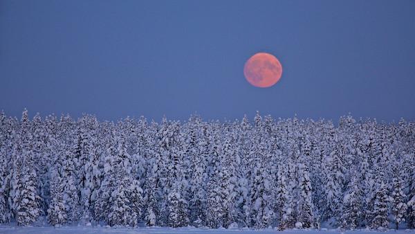 Mondaufgang - Arvidsjaur, Lappland, Schweden