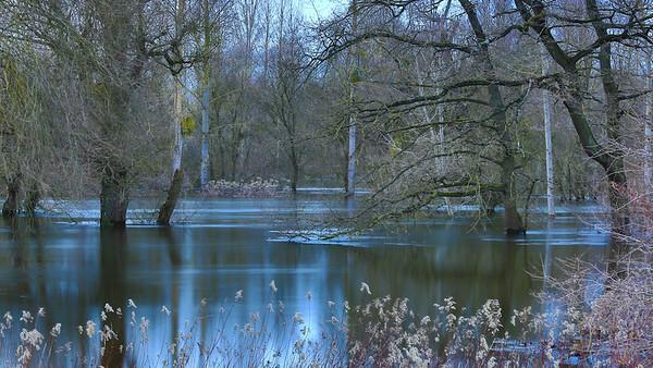 Weihnachtshochwasser am Altrhein bei Au am Rhen