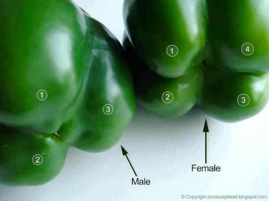 Bell pepper sex