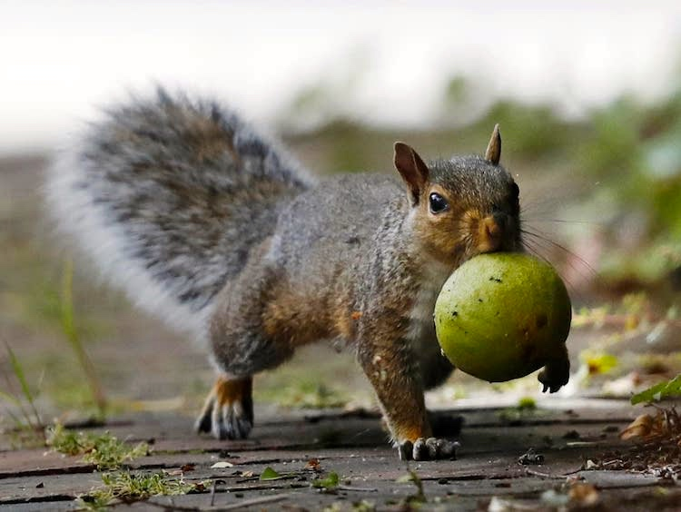 The Adventures of Billy Bonk the Squirrelly Squirrel