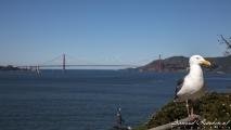 Uitzicht op de Golden Gate Brigde