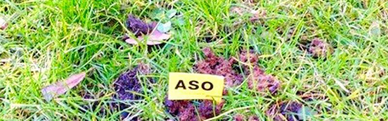 Het aso-vlaggetje