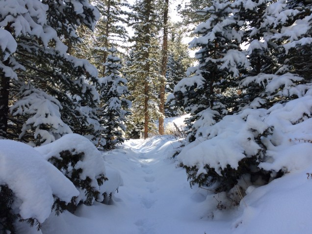 Colorado Trail Segment 3 in Winter