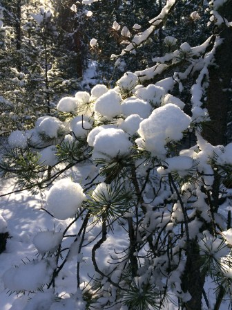 Pillows of snow rest on evergreen brances