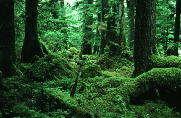 Here are just a few. Coastal Temperate Rainforest Chicken Or Egg Forest Or Moss A Rocha
