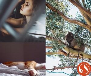 Formation aromathérapie - troubles du sommeil