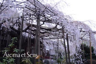 浦和発♪アロマでオンリーワンの幸せへと導く自宅サロン-玉蔵院5
