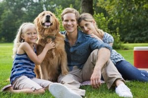 Is tea tree oil safe for dogs