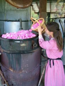 Rosen Destillation Zypern