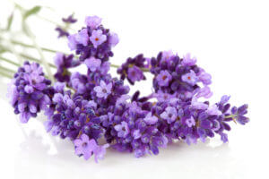 ätherische Öle für die Hausapotheke - Lavendel