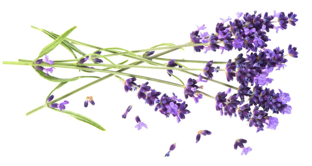 Lavendel - mit ätherischen Ölen gut durch den Tag