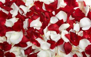 赤バラ白バラ