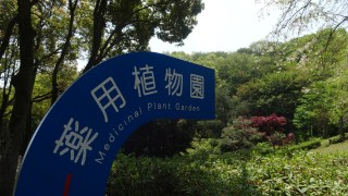 薬草園見学会を開催する理由、植物園in東京都八王子