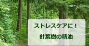 ストレスケアに針葉樹