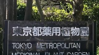 東京都薬用植物園でアロマの植物に会ってきました♪