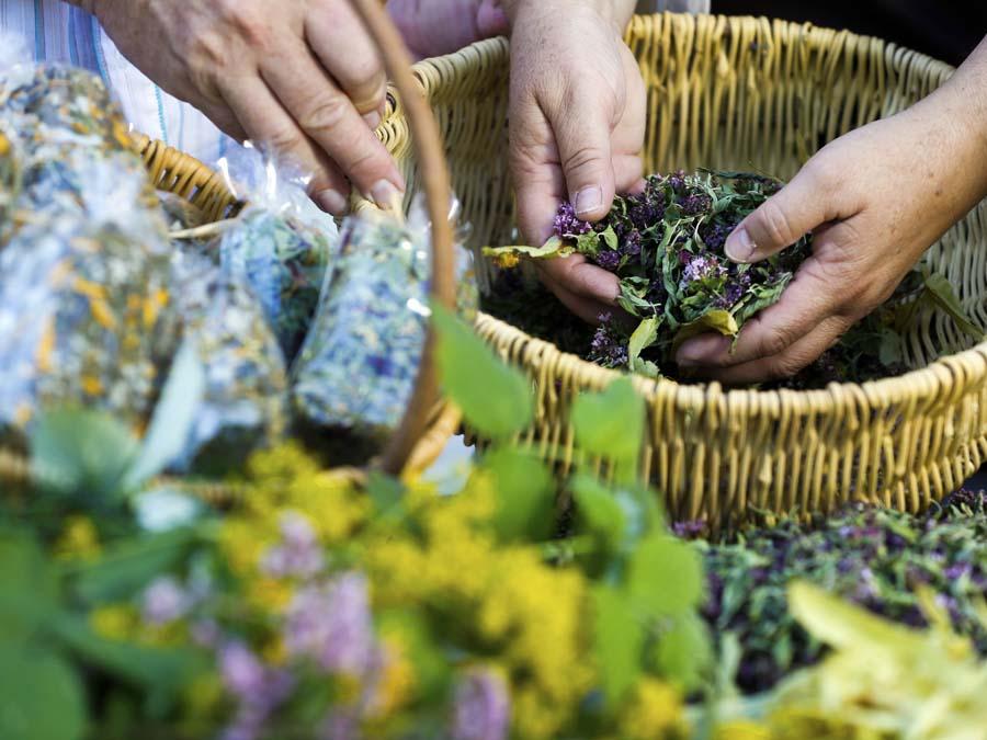 La medicina tradicional mejicana a nuestro alcance