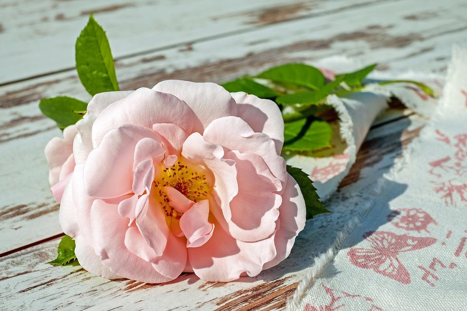 LA ROSA: la más sublime de las flores y su apreciado aceite