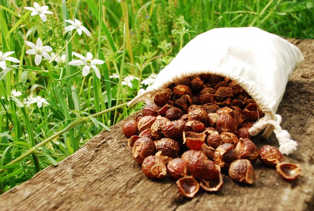Sapindus Mukorossi, un jabón de la naturaleza