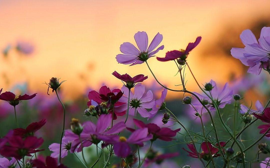 Huele a primavera !!!