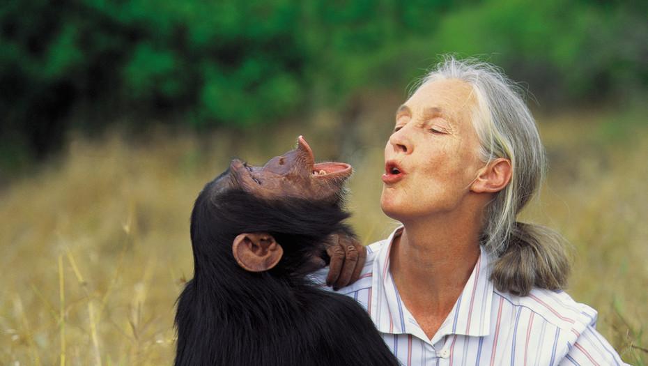 """JANE GOODALL: """"Los humanos, como especie, vamos hacia atrás"""""""