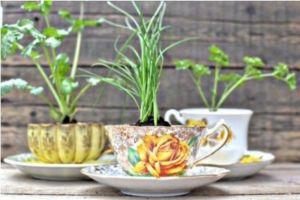giardino aromatico 4