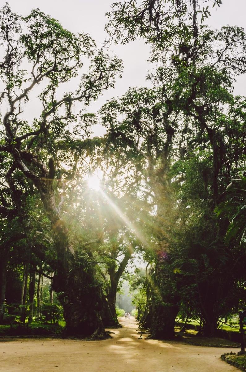 atlantischer-regenwald