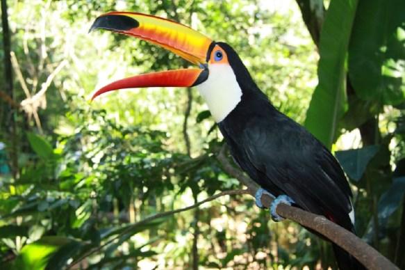 tukan_vogelpark_foz_do_iguacu