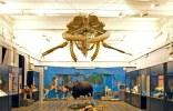 Roma con i bambini. museo-civico-zoologia-roma-balena