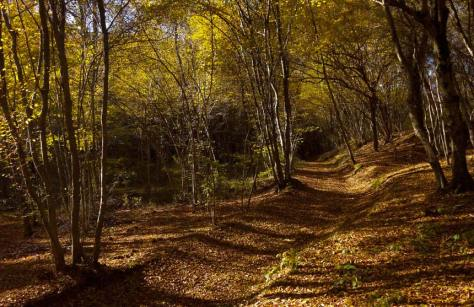 foliage bambini parco curone montevecchia lombardia
