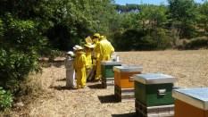 trasimeno_attivita_bambini_apicoltore