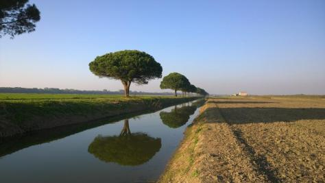Parco_delta_del_po_sentiero_alberi_bella