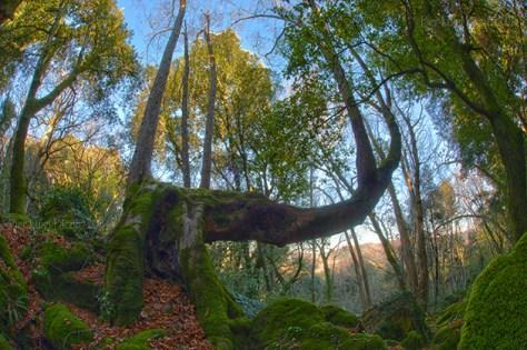 Riserva_monte_rufeno_sasseto_albero