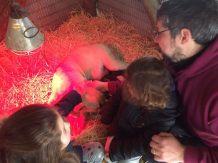 agriturismo_pulicaro_torre_alfina_visita_animali