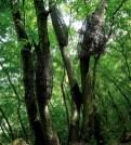 40 idee per un weekend con i bambini opera bosco calcata
