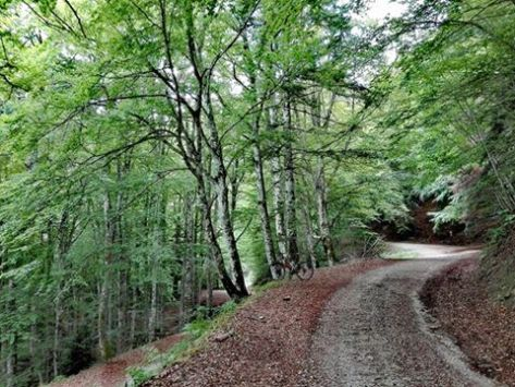 43 idee per un weekend con i bambini toscana foreste casentinesi