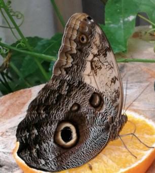 Casa Farfalle Siracusa 3