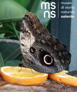 msns-mesocosmo-butterflyhouse3
