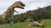 dinosauri_pietre_drago_matelica2