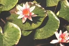 Heller Garden-giardino