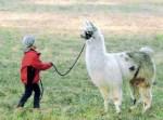 Maso Eden-gli alpaca