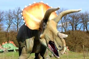 Pietre del Drago-Triceratopo