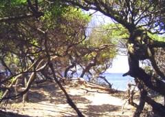 Parco_naturale_rimigliano_sentieri