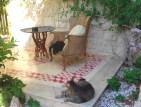 Casa Farlisa-gatti in cortile