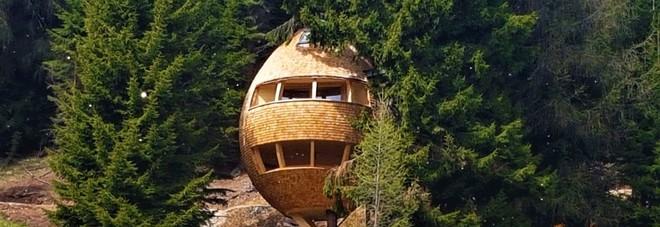 casa sull'albero bambini famiglie -malga_priu_pigna_friuli-boschi