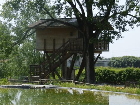 casa sull'albero-fattoria_oasi-pavia_lombardia