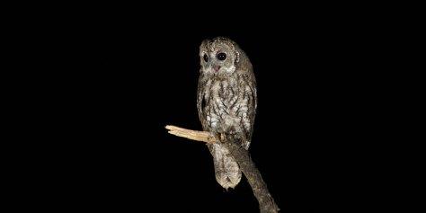 esperienze trasimeno bambini ali nella notte animali notturni