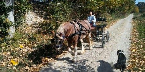 esperienze trasimeno bambini in carrozza sui sentieri di annibale