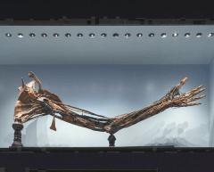 MUSME-Museo della Medicina-anatomia