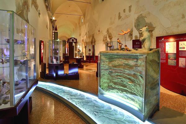 Museo dei Grandi Fiumi-sale-espositive-ph.rovigoinfocitta