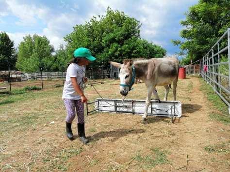 weekend bambini lombardia fattoria sbaraglio